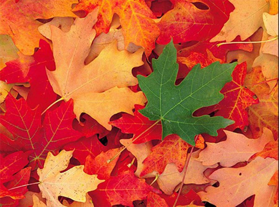 秋のくらしと片づけ講座